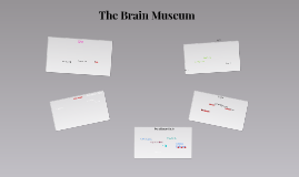 The Brain Museum