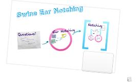 Swine ear tagging