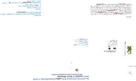 Copy of Copy of Equilibrio de Hardy Weinberg