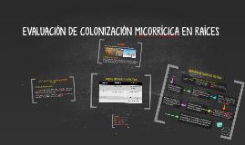 EVALUACIÓN DE COLONIZACIÓN MICORRÍCICA EN RAÍCES