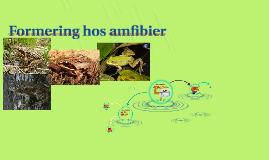 Formering hos amfibier