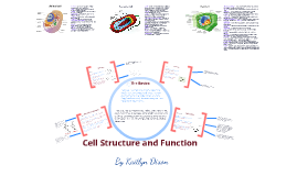 2.1 Cell Structure and Function