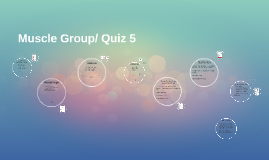 Muscle Group/ Quiz 5