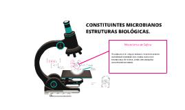 CONSTITUINTES MICROBIANOS