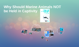 Why Should Marine Animals NOT be Held in Captivity