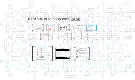PTM site prediction using SVMs