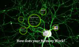 How does your Memory work?
