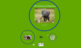 Elephant Presentation