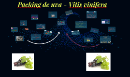 Copy of Packing de la uva - Vitis vinifera