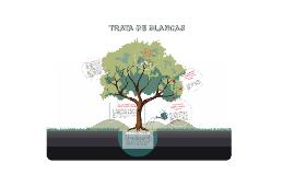 TRATA DE BLANCAS