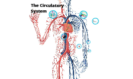 Copy of Hannah&Isabel- The Circulatory System