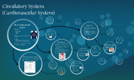 Circulatory System (Cardiovascular System)