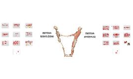 Copy of Sistema Esquelético e Muscular