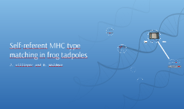 Self-referent MHC type matching in frog tadpoles