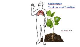 Basiskonzept: Struktur und Funktion
