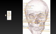Mathias Skeleton Project