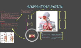 Copy of Respiratory System 1