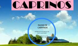 RAZAS DE CABRINOS