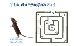 Copy of The Norwegian Rat by Naguib Mahfouz