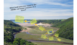 Rivers 6 : What landforms are found in the middle and lower courses of a river?