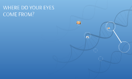 WHERE DO YOUR EYES COME FROM?