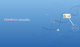 Glandulas sexuales.