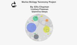 Marine Biology Taxonomy Project