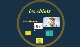 Copy of Copy of les chiots