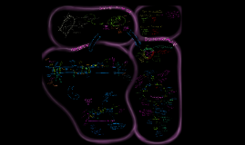Fotosynthese: Licht- en Donkerreactie