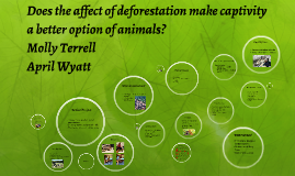 Copy of Does the affect of deforestation make captivity a better opt