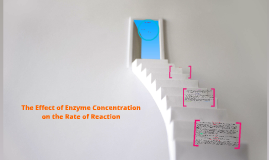 The Effect of Enzyme Concentration on the Rate of Reaction