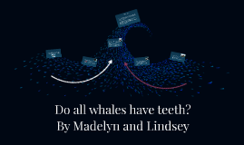 Do all whales have teeth?