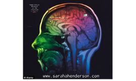 Mind and Brain Research in the Classroom