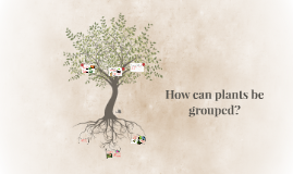 How can plants be grouped?