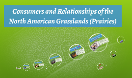 Consumers and Relationships of the North American Grasslands (prairies)