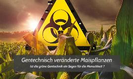 genetisch veränderte Maispflanzen