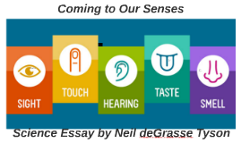 Copy of Coming to Our Senses