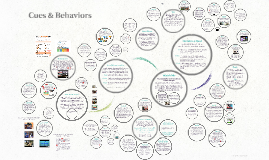 Cues & Behaviors