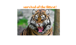 survival of the fittest!