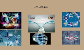 Copy of LEYES DE MENDEL