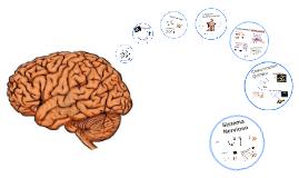 Bases de Neurociencias