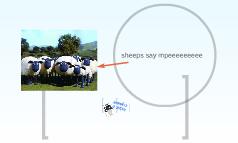 Sheep are white