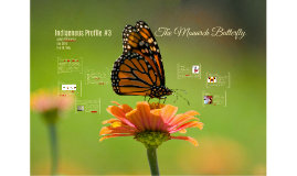 Indigenous Species Profile #3 - The Monarch Butterfly