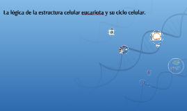 La lógica de la estructura celular eucariota y su ciclo celu