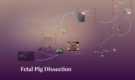 Copy of Fetal Pig Dissection