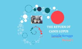 Copy of THE RETURN OF CANIS LUPUS