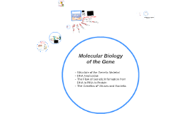 Chapter 10: Molecular Biology of the Gene