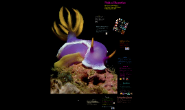Naked Beauties: The World of Nudibrachs
