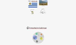 Enzootische Calcinose