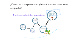 Copy of reacciones acopladas, reacciones endergonicas y exergonicas